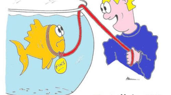 goldfish beginners