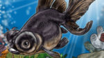 Black Moor Fish Care and Info