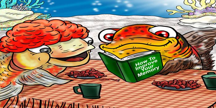 goldfish memory 3 seconds