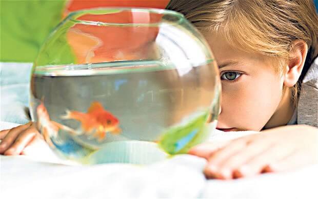 children and goldfish