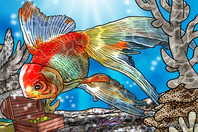 Fantail Goldfish A Fancy Goldfish Fantail Goldfish Care