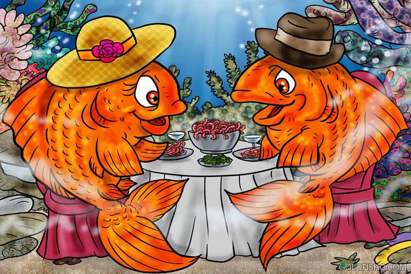goldfish diet