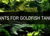 plants for goldfish tanks