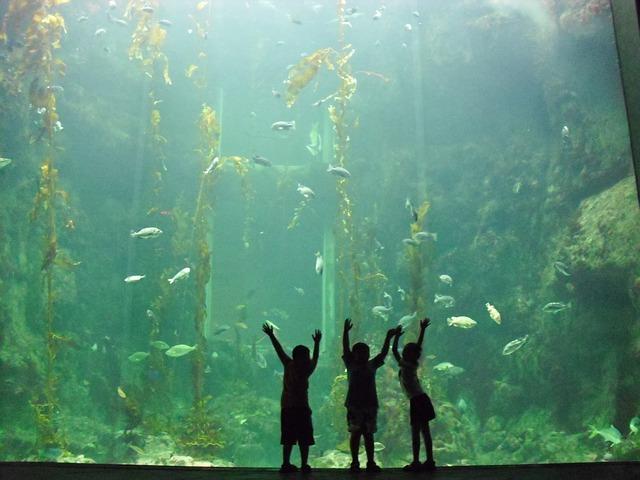 huge goldfish tank