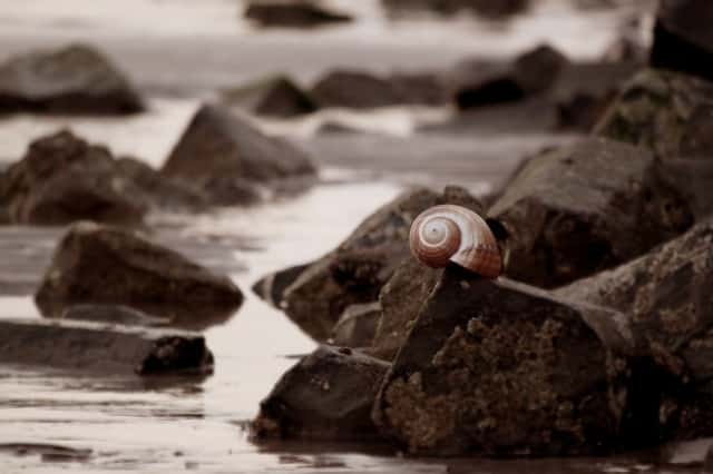 snail by the ocean