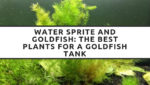 Water Sprite and Goldfish: The Best Plants for a Goldfish Tank