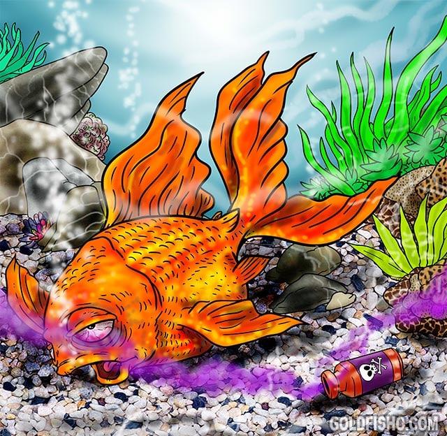 ammonia fish poisoning