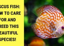 discus fish how to care for and breed this beautiful species