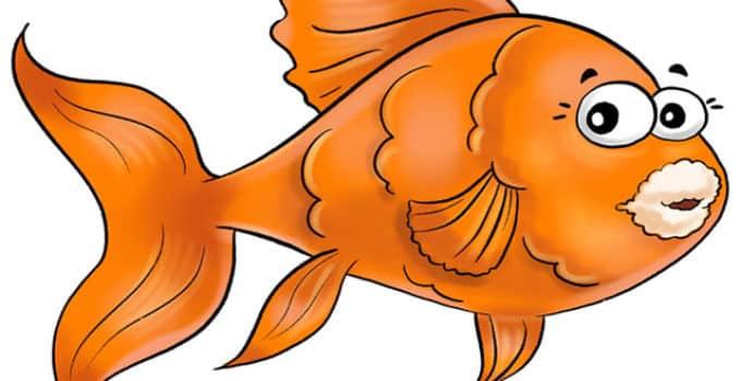 cotton mouth disease fish