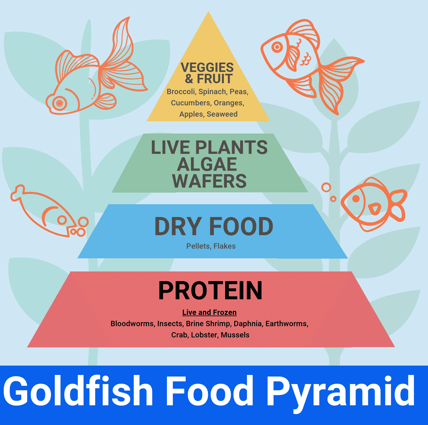 goldfish food pyramid