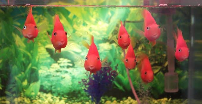 aquarium fish keeping mistakes 4 most common blunders you should avoid