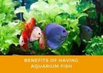 benefits of having aquarium fish