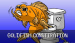 Goldfish Constipation – Do Goldfish Get Constipated?