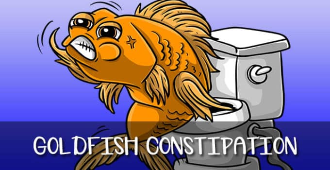 do goldfish get constipated