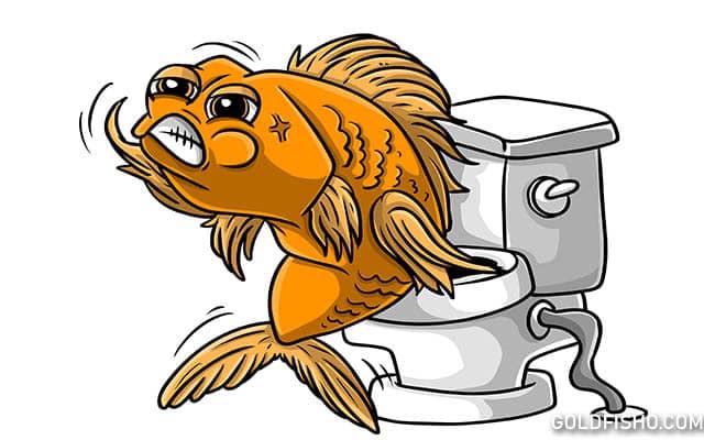 goldfish constipation