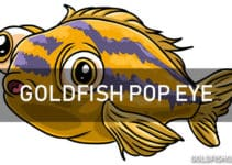 goldfish pop eye disease