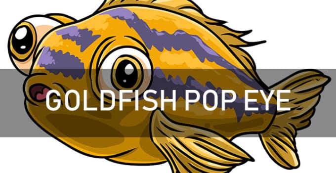 goldfish pop eye disease