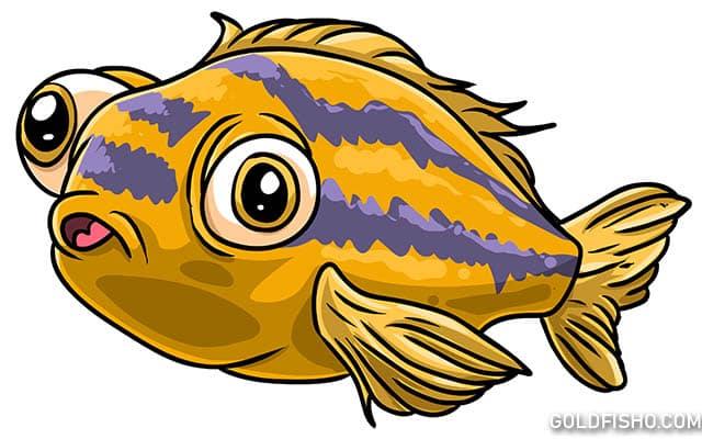 goldfish pop eye