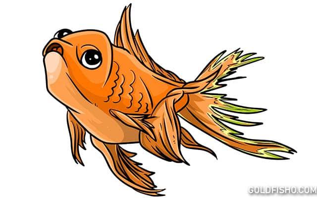goldfish tail rot
