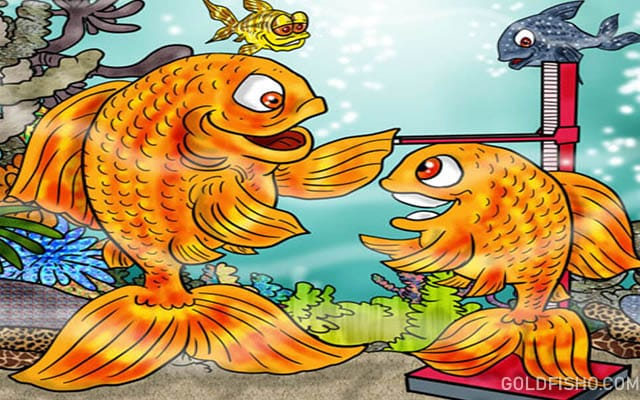 Help Your Goldfish Grow - Goldfish Size - How Big Do They Get