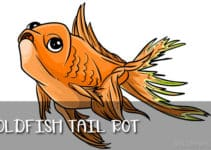 tail rot in goldfish