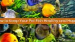 How to Keep Your Pet Fish Healthy and Happy