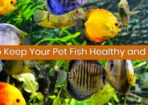 keep fish healthy and happy