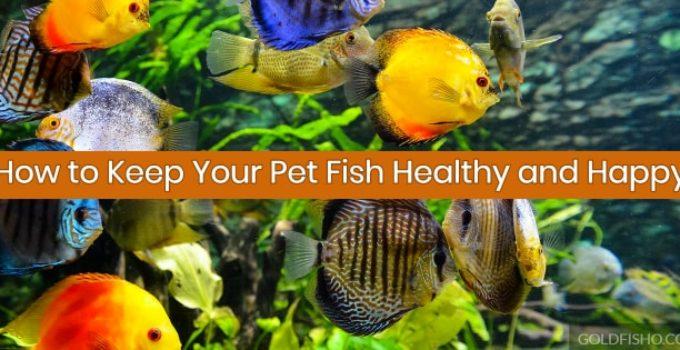 keep fish healthy and happy