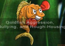 goldfish aggression