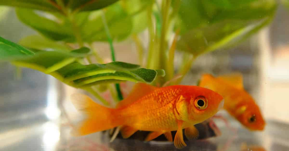 Understanding the characteristics of a fish