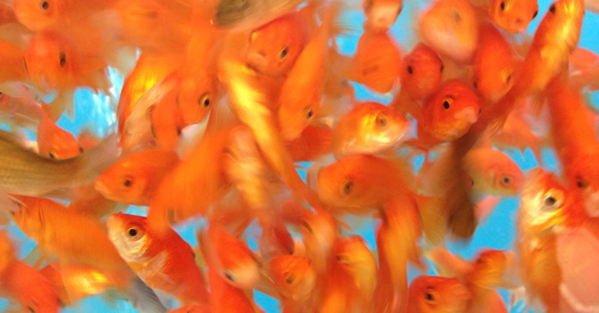over crowding fish tank dangerous