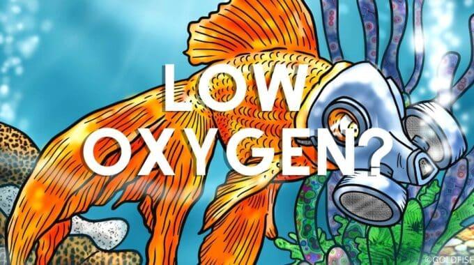 aquarium oxygen level